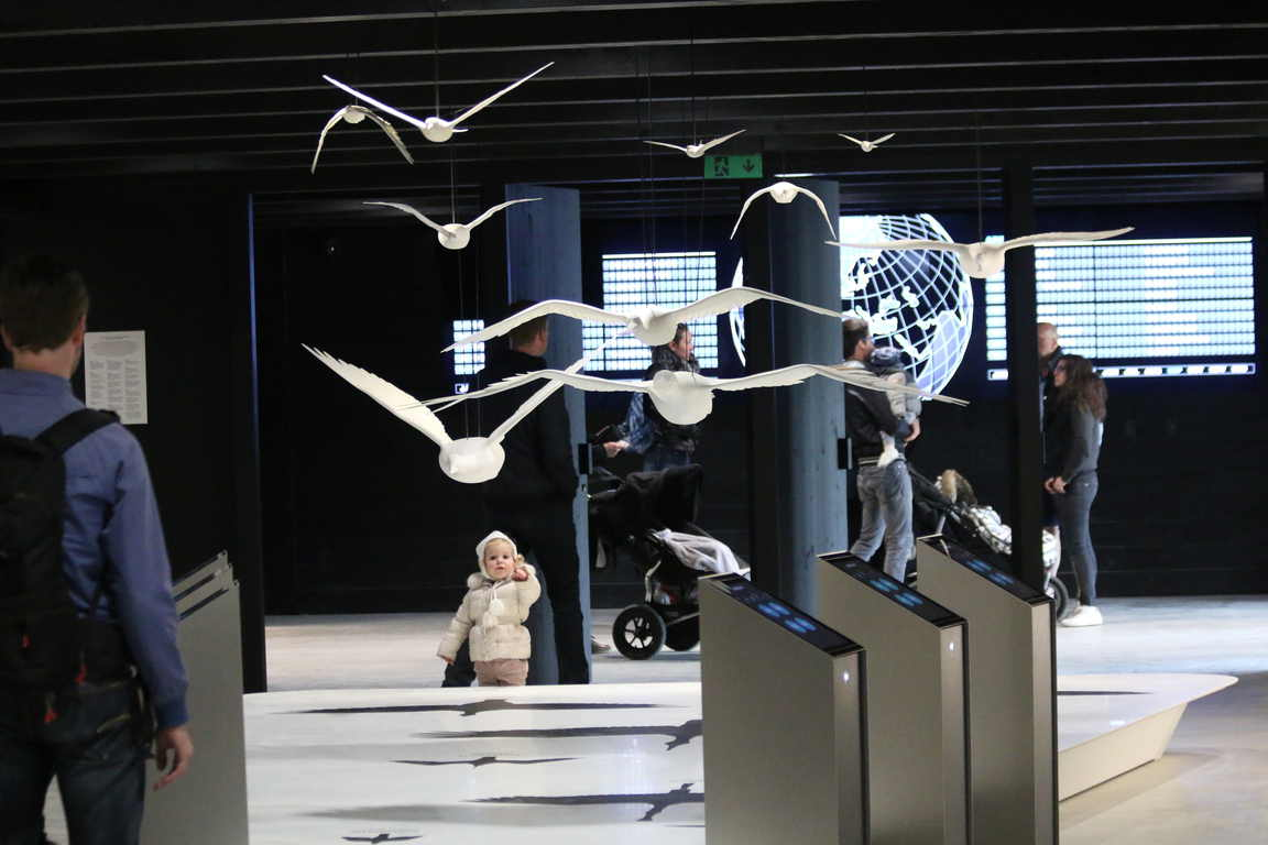 """Vogel-Flug-Modelle im """"Het Zwin"""""""