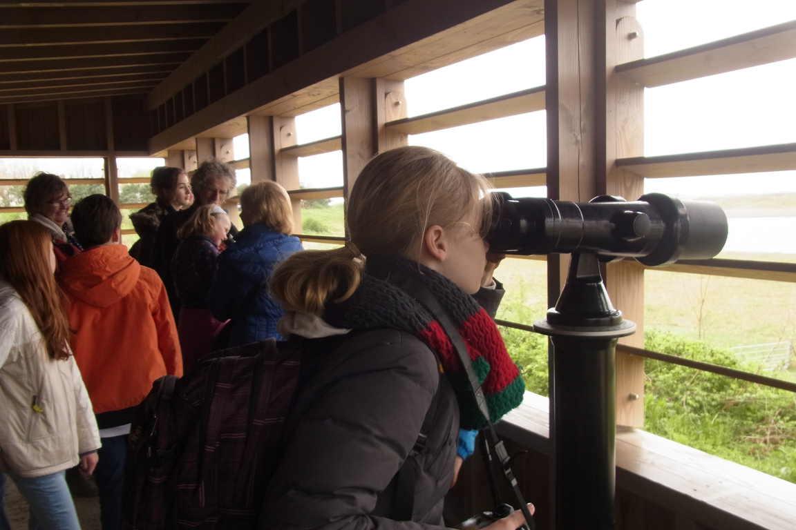"Vögelbeobachtungsstation im ""Het Zwin"""
