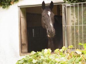 """Tag der offenen Tür """"Manege Hippo d` Or"""" Nieuwvliet-Bad @ Pferdehof Manege Hippo d`Or"""