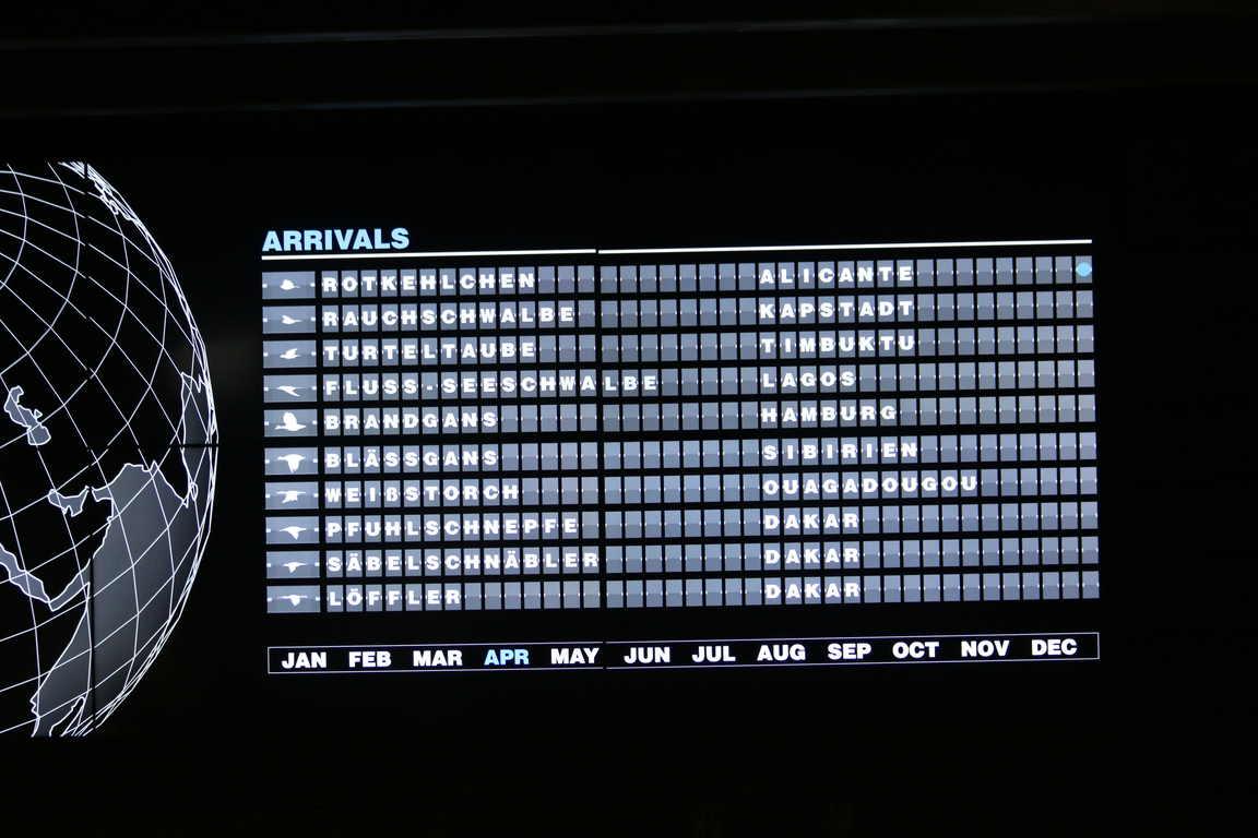 "Abflug-Ankunft-Monitor der Zugvögel im ""Het Zwin"""