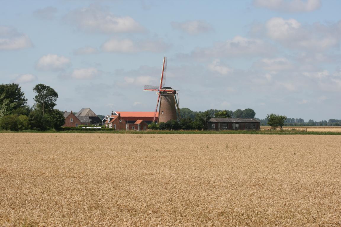 Windmühle Zuidzande