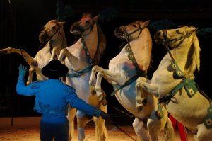 Zirkus Renz International in Cadzand-Bad @ Cadzand-Bad Eventementerrein, Ringdijk Noord | Cadzand | Zeeland | Niederlande
