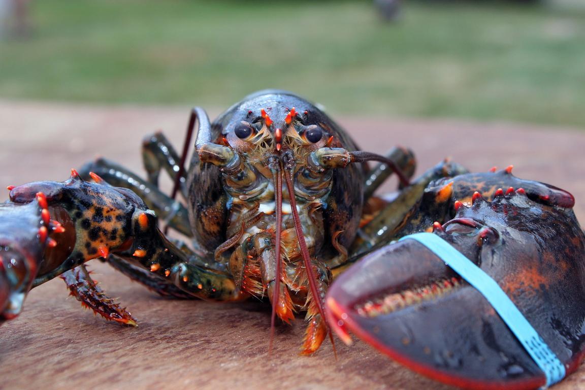 The Blue Lobster Zeebrügge
